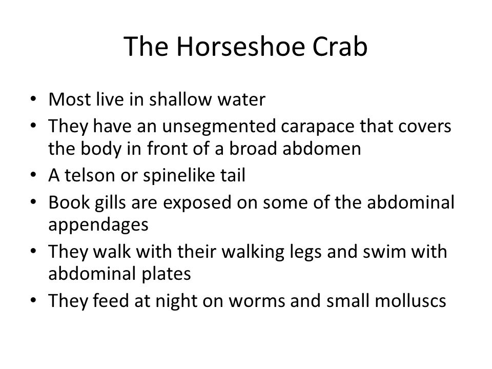 The Horseshoe Crab Most live in shallow water They have an unsegmented carapace that covers the body in front of a broad abdomen A telson or spinelike
