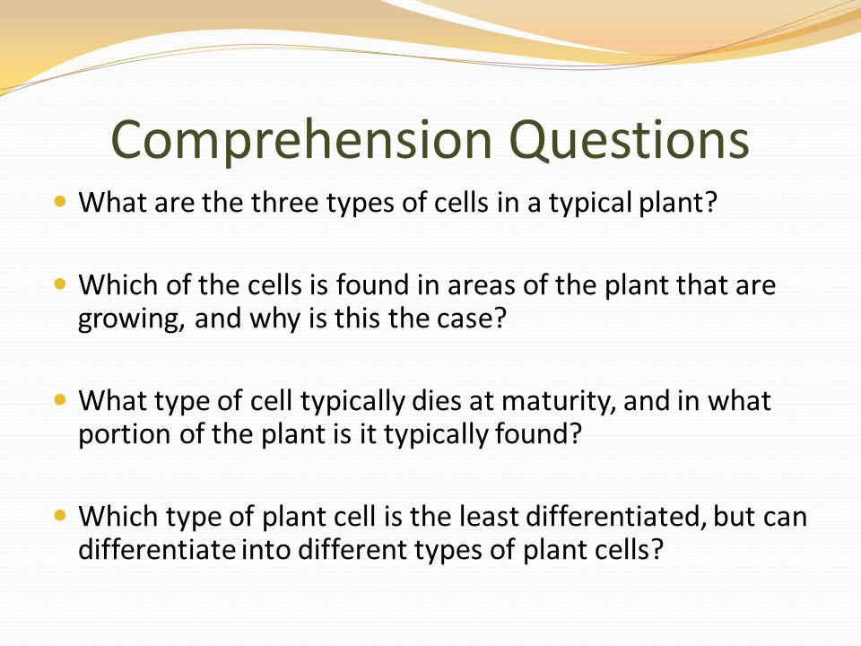 Comprehension Questions What are the three types of cells in a typical plant.