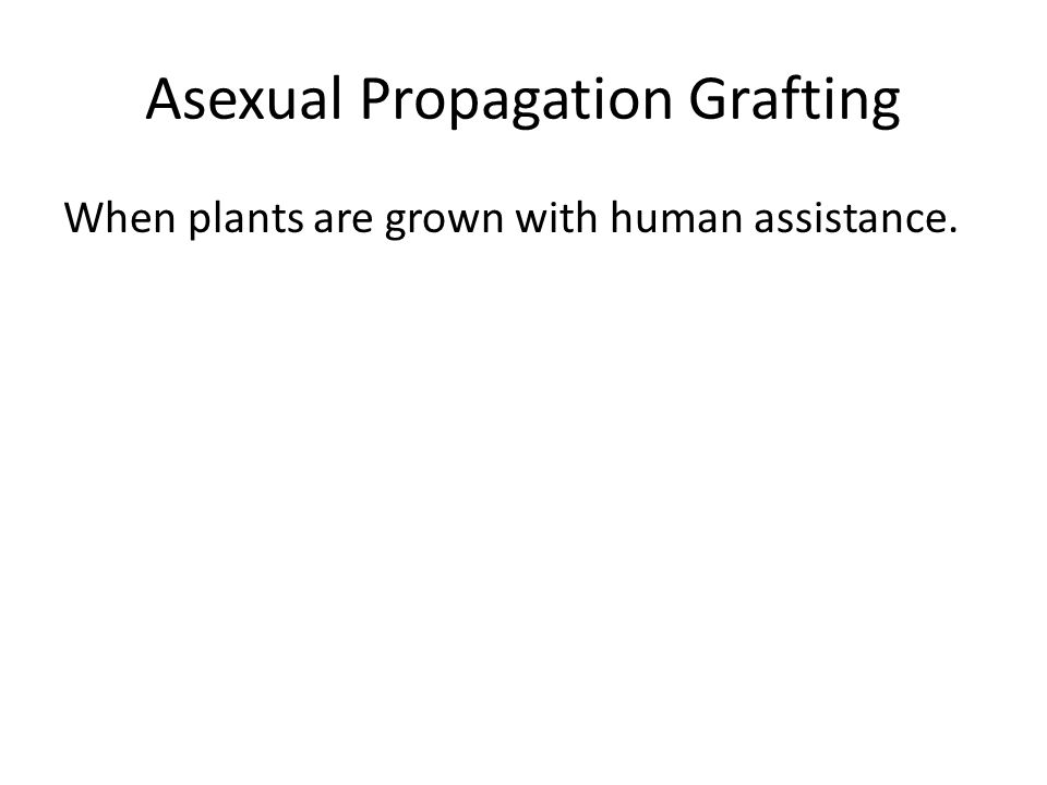 Asexual Propagation Grafting When plants are grown with human assistance.