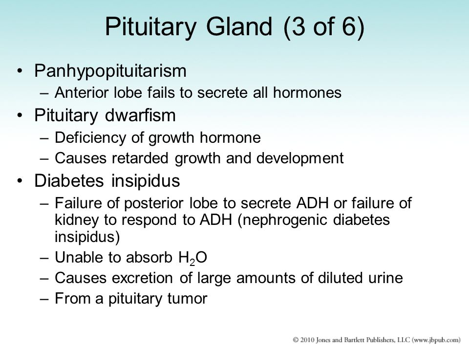 Pituitary Gland (3 of 6) Panhypopituitarism –Anterior lobe fails to secrete all hormones Pituitary dwarfism –Deficiency of growth hormone –Causes reta