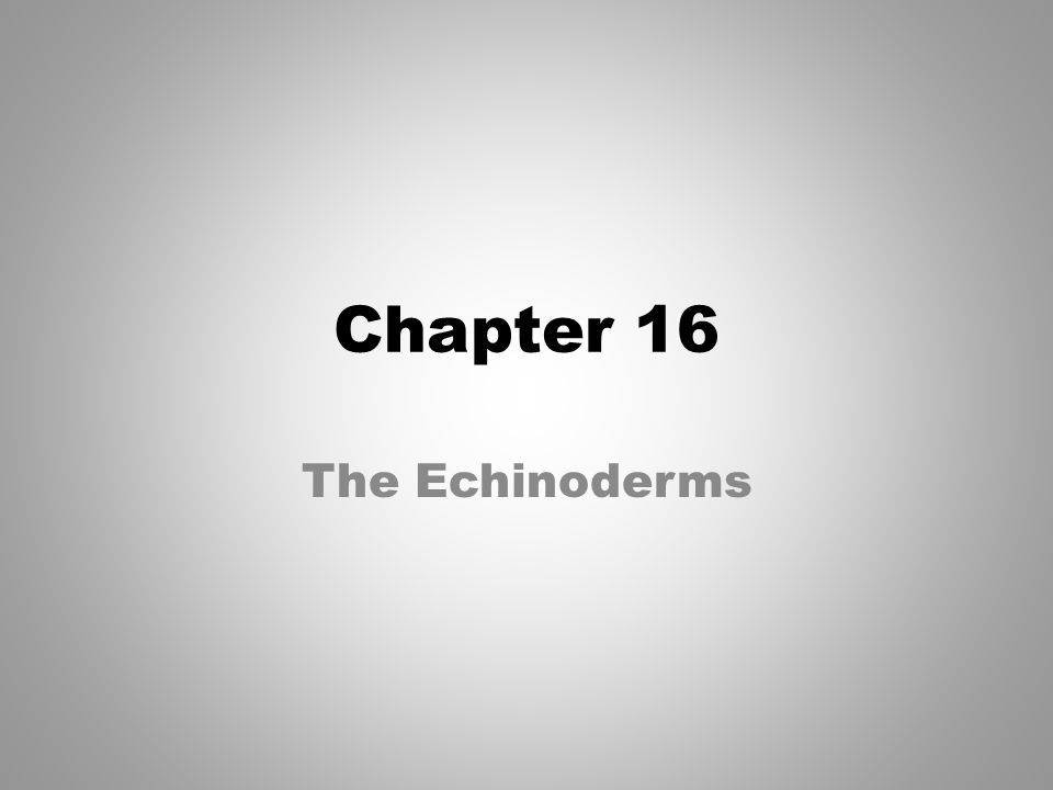 Chapter 16 The Echinoderms