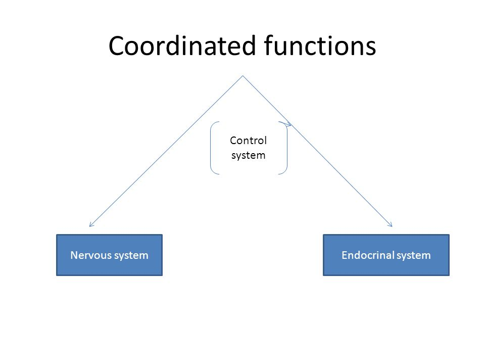 Coordinated functions Nervous systemEndocrinal system Control system