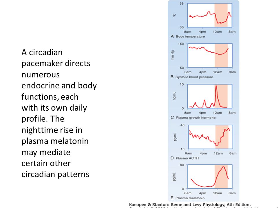 A circadian pacemaker directs numerous endocrine and body functions, each with its own daily profile.