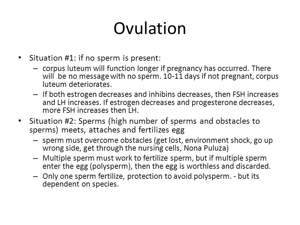 Ovulation Situation #1: if no sperm is present: – corpus luteum will function longer if pregnancy has occurred. There will be no message with no sperm