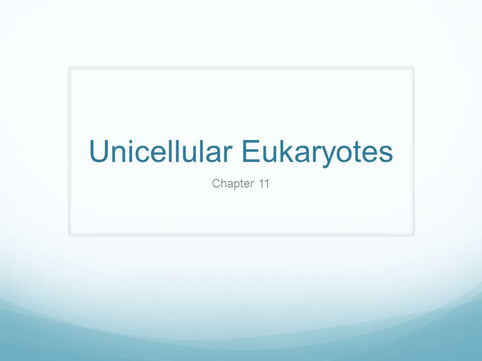 Unicellular Eukaryotes Chapter 11