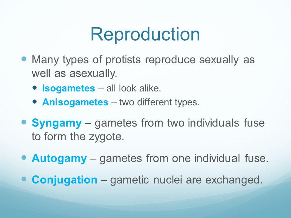 Reproduction Many types of protists reproduce sexually as well as asexually. Isogametes – all look alike. Anisogametes – two different types. Syngamy