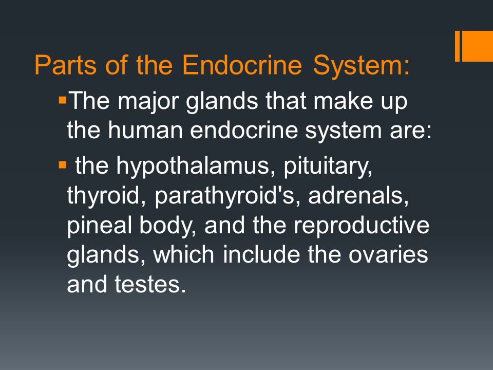 Parts of the Endocrine System:  The major glands that make up the human endocrine system are:  the hypothalamus, pituitary, thyroid, parathyroid's,