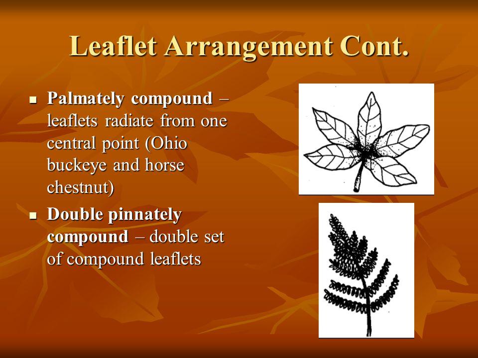 Leaflet Arrangement Cont.