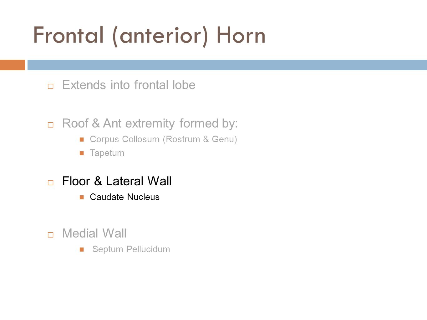 Frontal (anterior) Horn  Extends into frontal lobe  Roof & Ant extremity formed by: Corpus Collosum (Rostrum & Genu) Tapetum  Floor & Lateral Wall