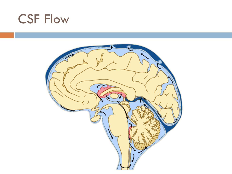 CSF Flow