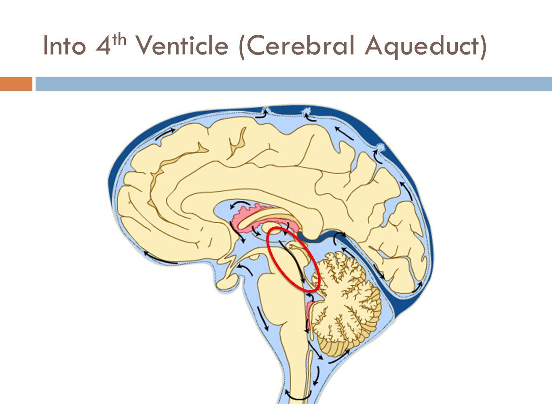 Into 4 th Venticle (Cerebral Aqueduct)