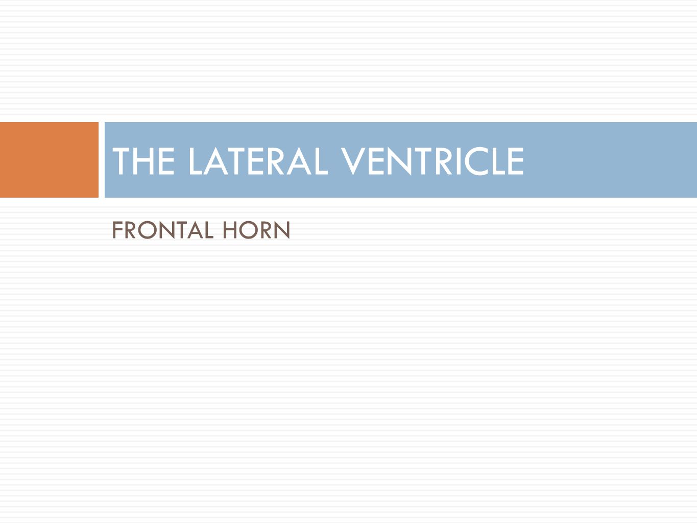 FRONTAL HORN THE LATERAL VENTRICLE