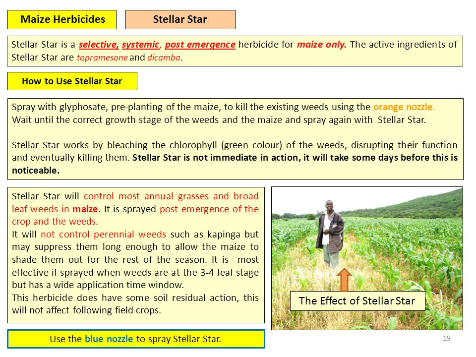 19 Stellar Star is a selective, systemic, post emergence herbicide for maize only.