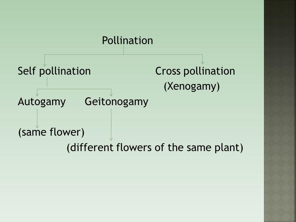 Pollination Self pollination Cross pollination (Xenogamy) Autogamy Geitonogamy (same flower) (different flowers of the same plant)
