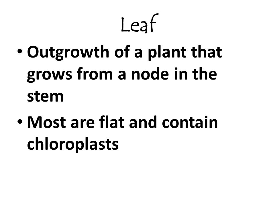 Leaf Outgrowth of a plant that grows from a node in the stem Most are flat and contain chloroplasts