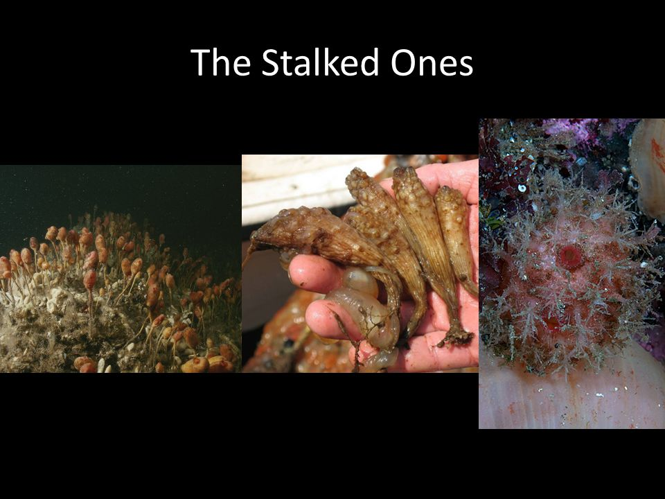 The Stalked Ones