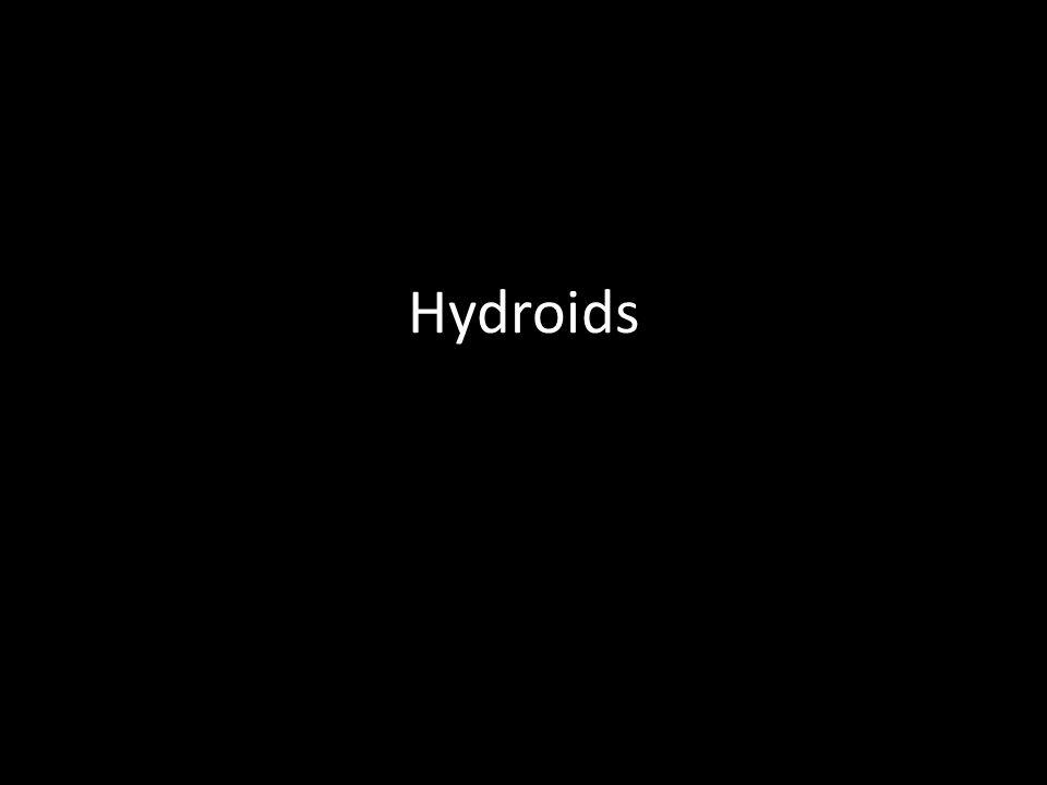 Hydroids