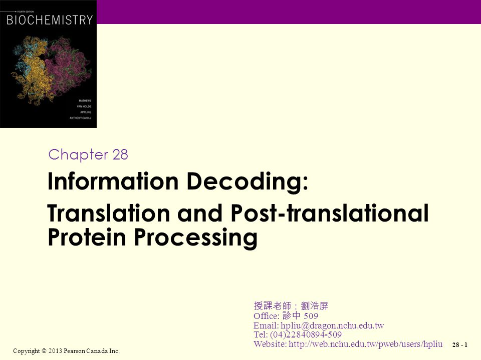 Initiation of translation in eukaryotes Copyright © 2013 Pearson Canada Inc.