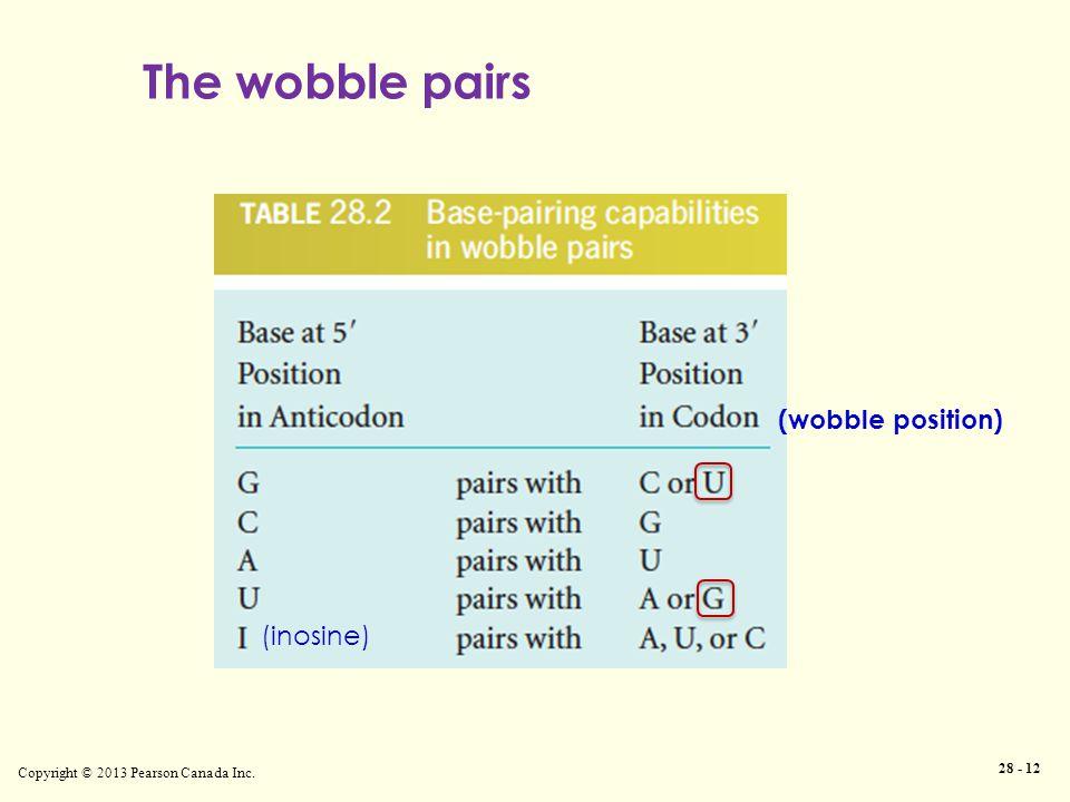 Copyright © 2013 Pearson Canada Inc. 28 - 12 The wobble pairs (inosine) (wobble position)