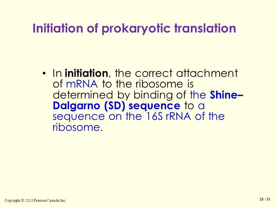 Initiation of prokaryotic translation Copyright © 2013 Pearson Canada Inc.