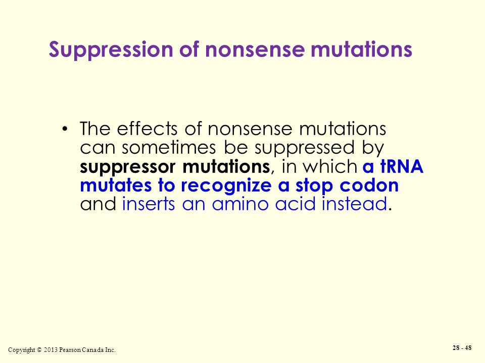 Suppression of nonsense mutations Copyright © 2013 Pearson Canada Inc. 28 - 48 The effects of nonsense mutations can sometimes be suppressed by suppre