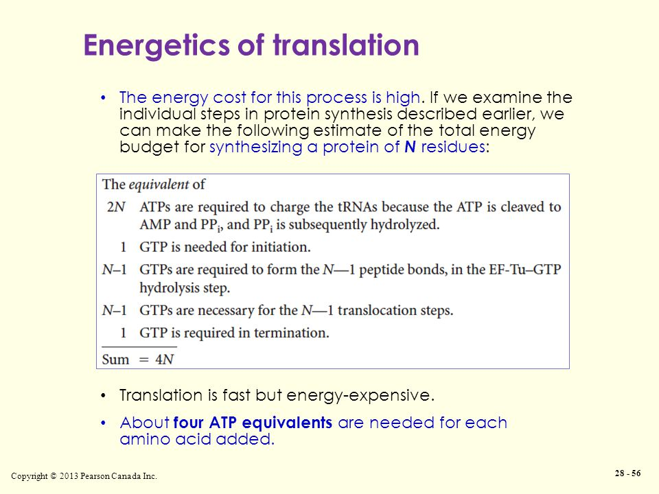 Energetics of translation Copyright © 2013 Pearson Canada Inc. 28 - 56 The energy cost for this process is high. If we examine the individual steps in