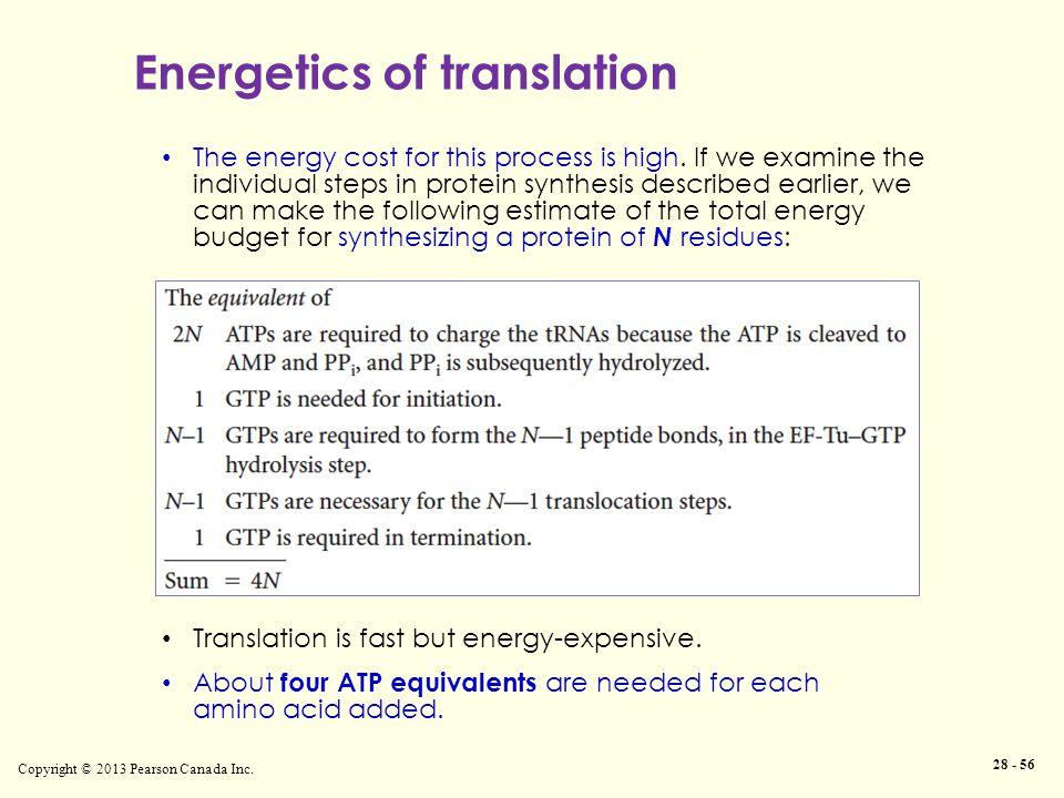 Energetics of translation Copyright © 2013 Pearson Canada Inc.