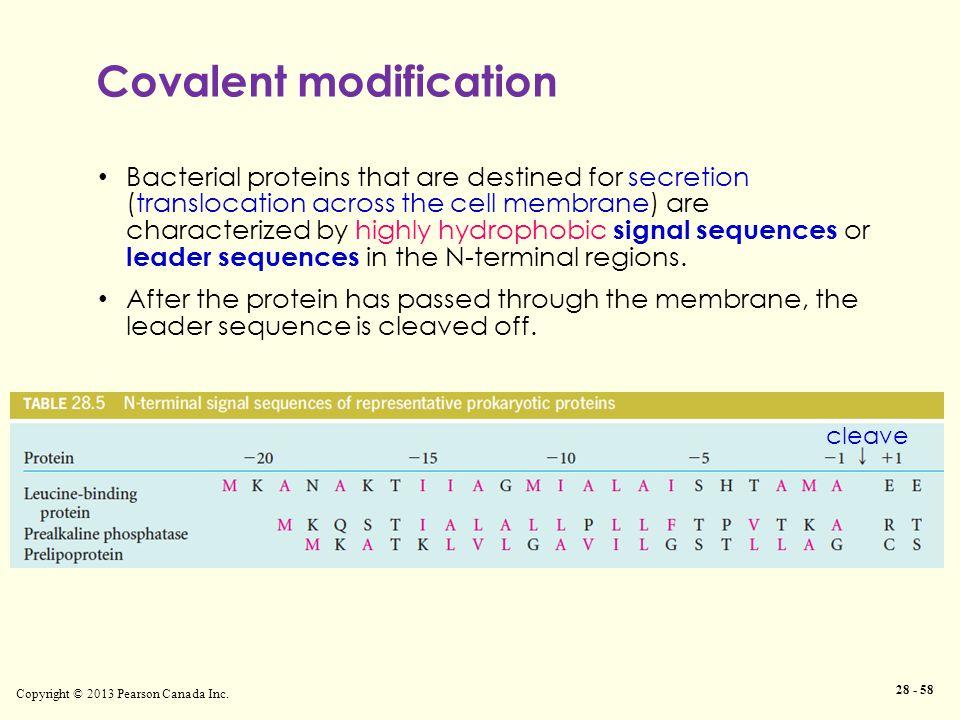 Covalent modification Copyright © 2013 Pearson Canada Inc.