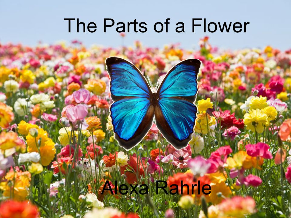 The Parts of a Flower Alexa Rahrle