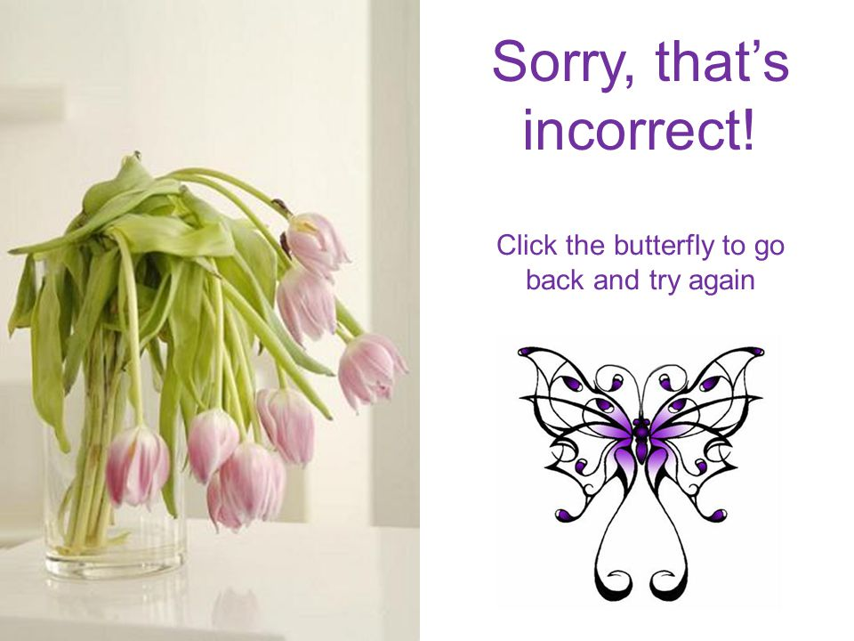 Sorry, that's incorrect! Click the butterfly to go back and try again
