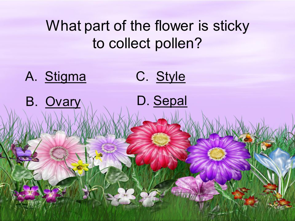 What part of the flower is sticky to collect pollen.
