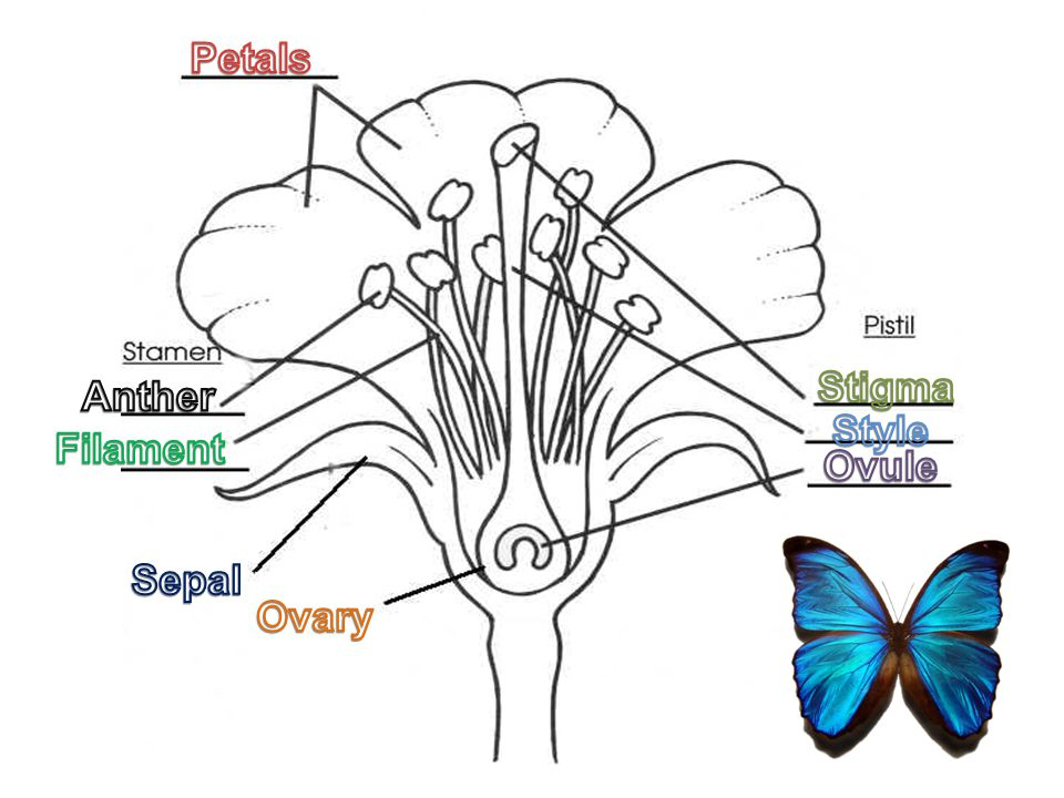 What part of the flower contains pollen.A. FilamentFilament B.