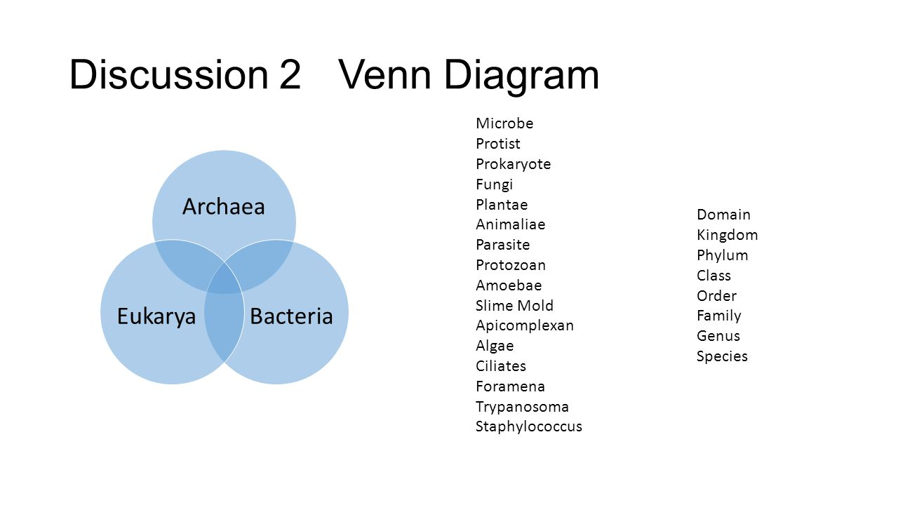Discussion 2Venn Diagram Archaea BacteriaEukarya Microbe Protist Prokaryote Fungi Plantae Animaliae Parasite Protozoan Amoebae Slime Mold Apicomplexan