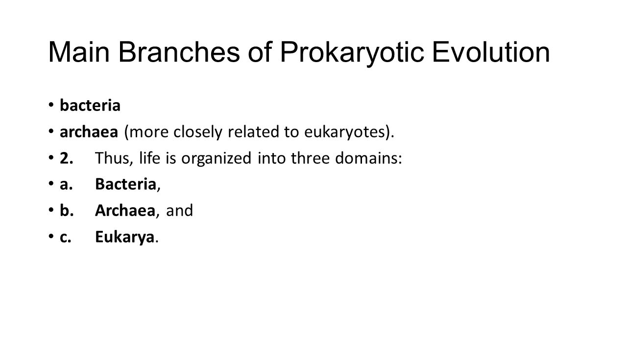 Main Branches of Prokaryotic Evolution bacteria archaea (more closely related to eukaryotes). 2.Thus, life is organized into three domains: a.Bacteria