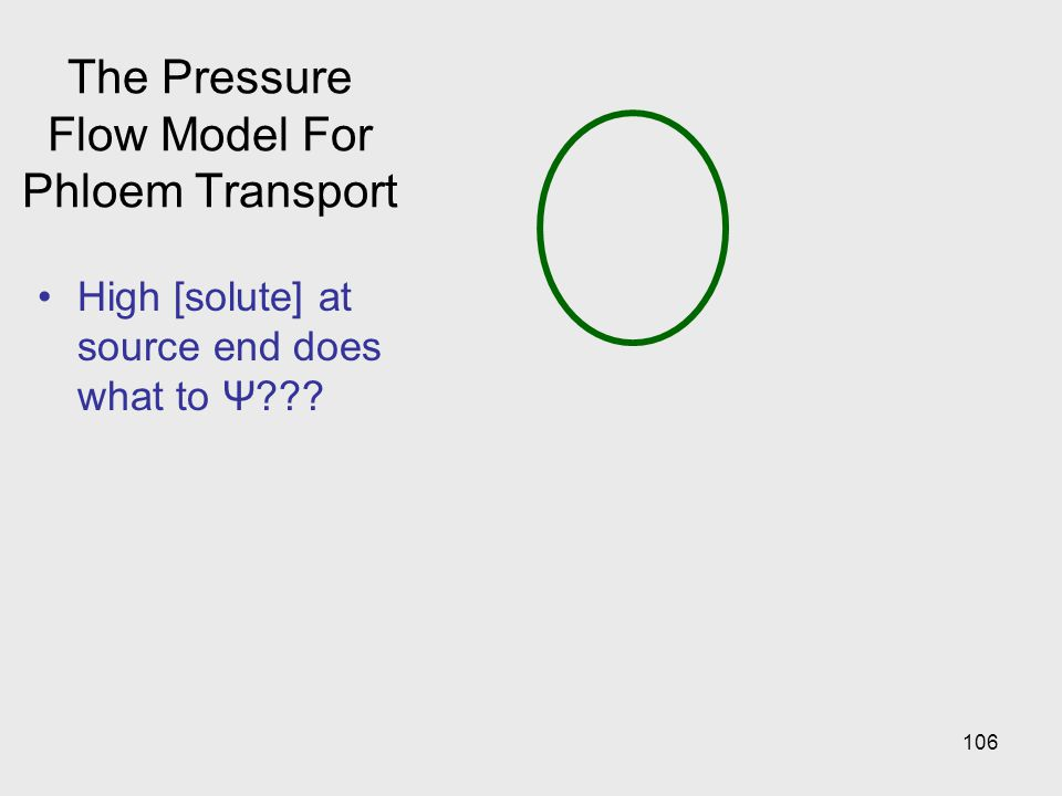 106 The Pressure Flow Model For Phloem Transport High [solute] at source end does what to Ψ???