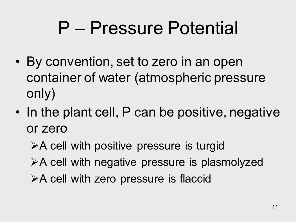 11 P – Pressure Potential By convention, set to zero in an open container of water (atmospheric pressure only) In the plant cell, P can be positive, n