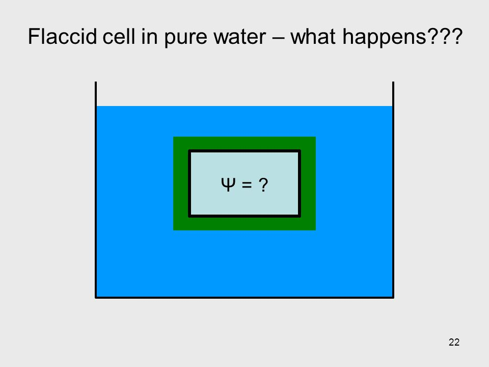 22 Flaccid cell in pure water – what happens??? Ψ = ?