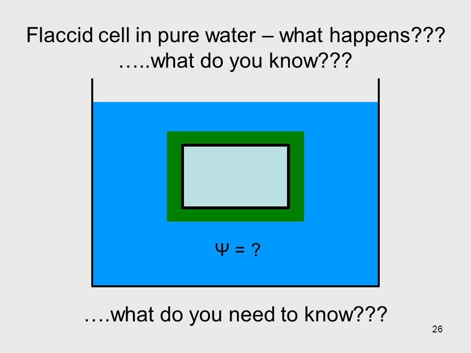 26 Flaccid cell in pure water – what happens??? …..what do you know??? Ψ = ? ….what do you need to know???