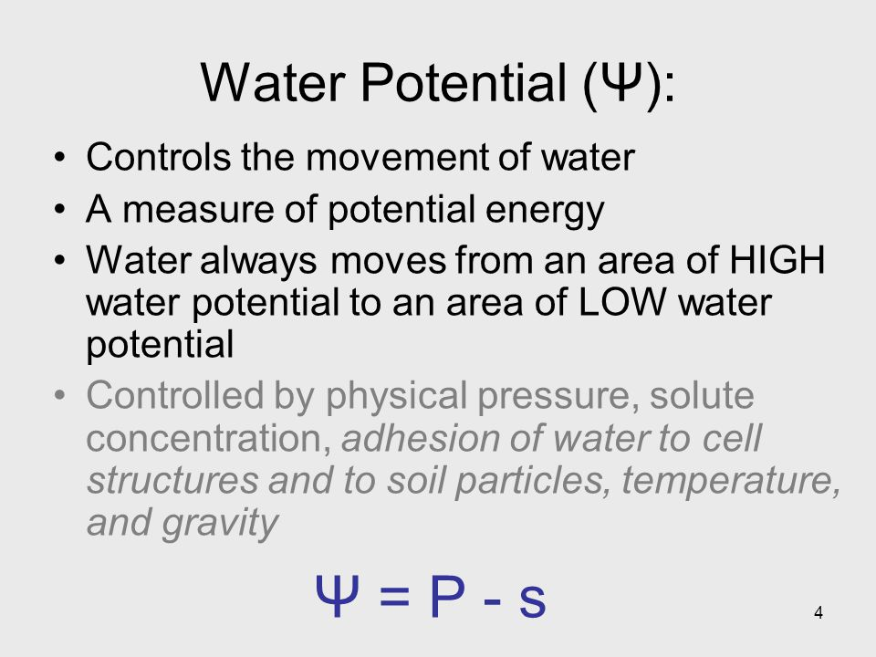 4 Water Potential (Ψ): Controls the movement of water A measure of potential energy Water always moves from an area of HIGH water potential to an area