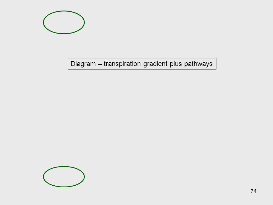 74 Diagram – transpiration gradient plus pathways