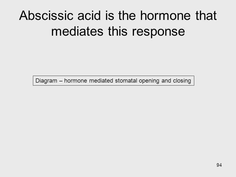 94 Diagram – hormone mediated stomatal opening and closing Abscissic acid is the hormone that mediates this response