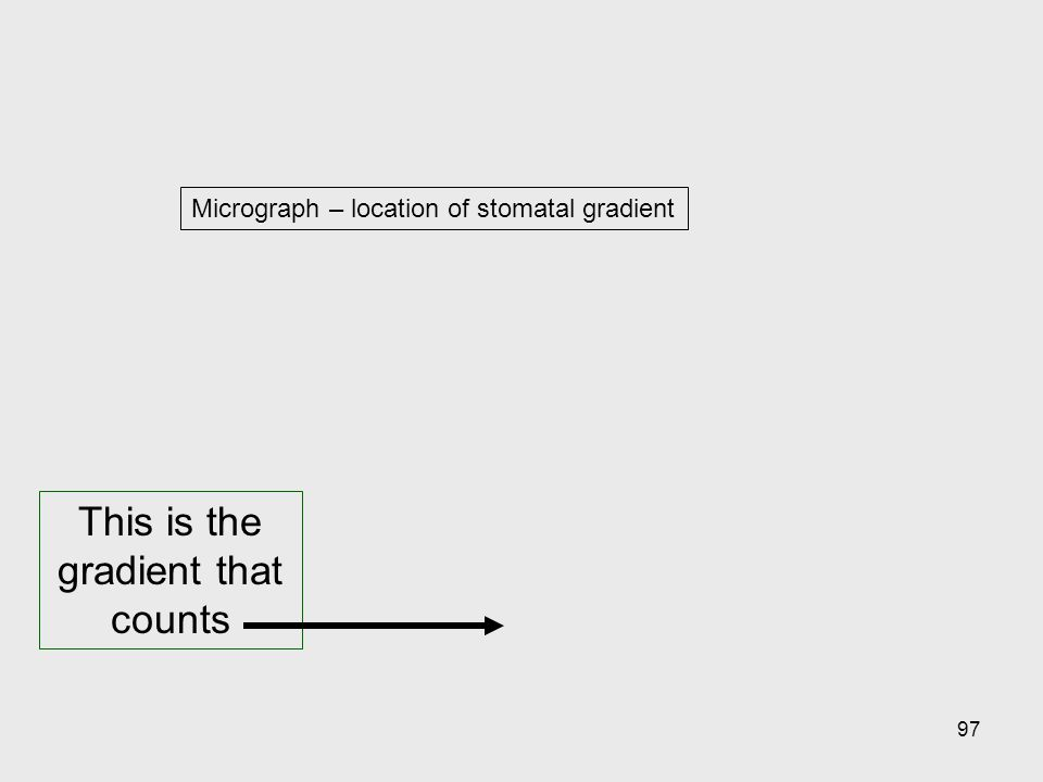 97 Micrograph – location of stomatal gradient This is the gradient that counts