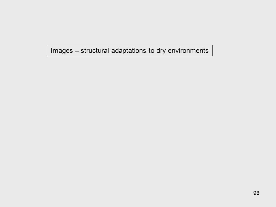 98 Images – structural adaptations to dry environments