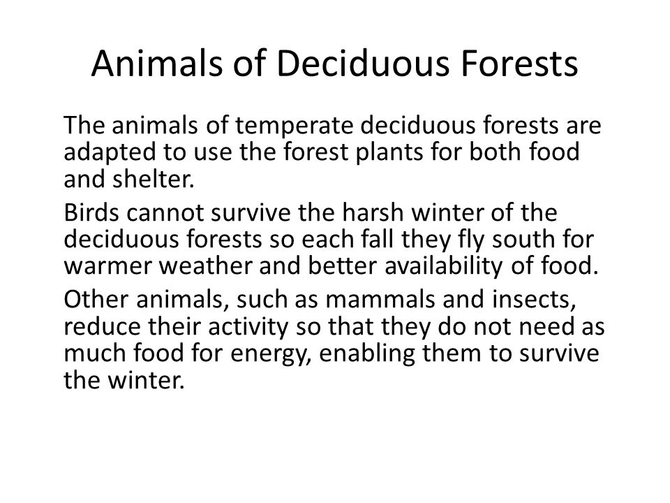 Animals of Deciduous Forests The animals of temperate deciduous forests are adapted to use the forest plants for both food and shelter. Birds cannot s