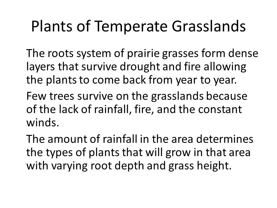 Plants of Temperate Grasslands The roots system of prairie grasses form dense layers that survive drought and fire allowing the plants to come back fr