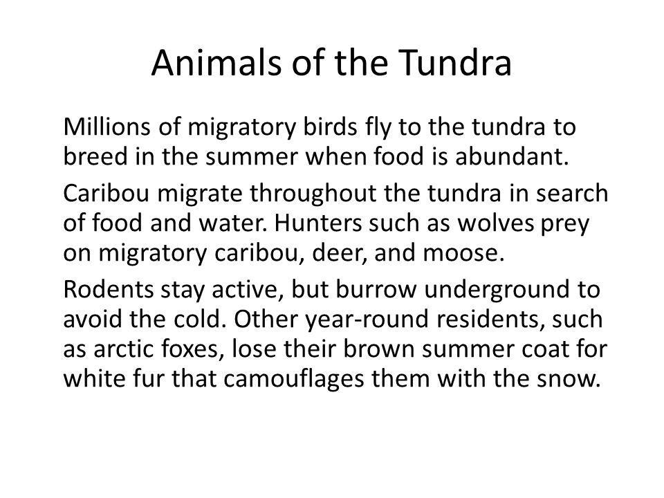 Animals of the Tundra Millions of migratory birds fly to the tundra to breed in the summer when food is abundant. Caribou migrate throughout the tundr