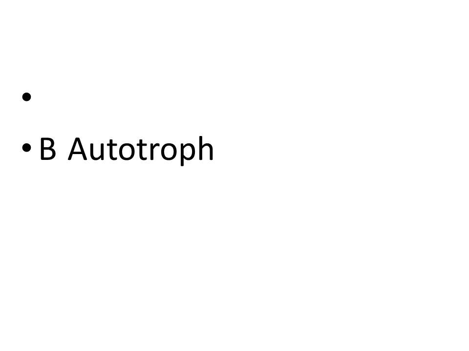 BAutotroph