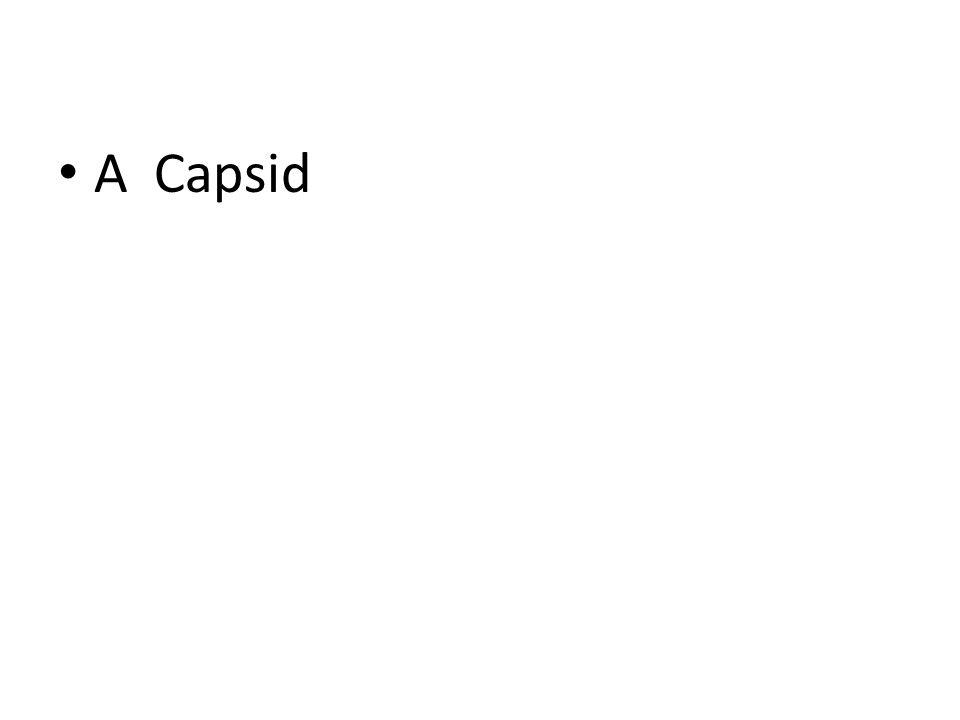 ACapsid