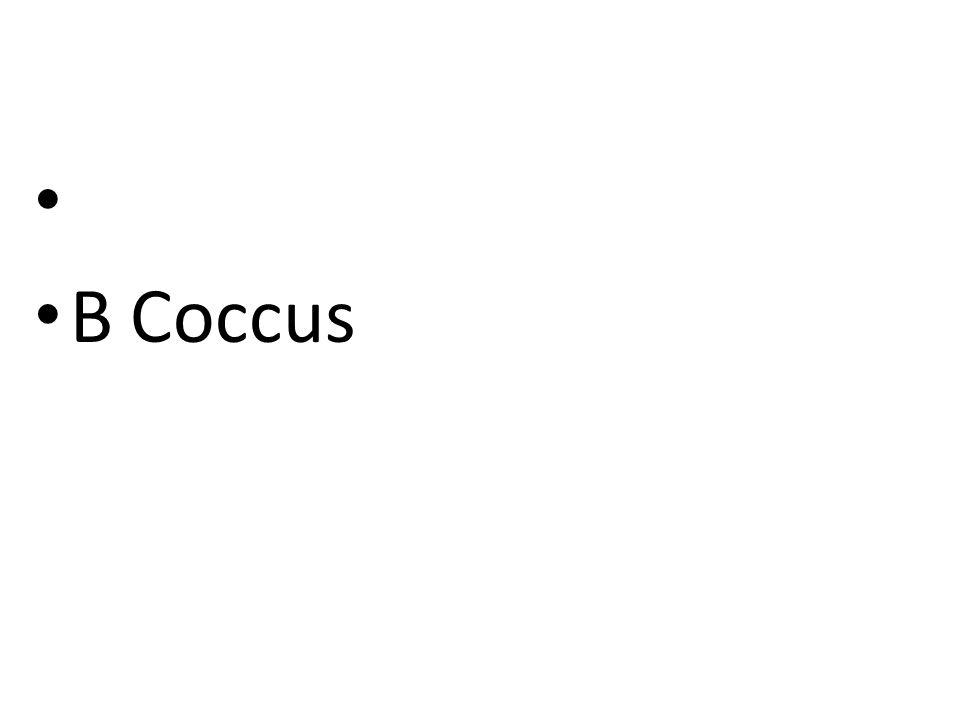 BCoccus