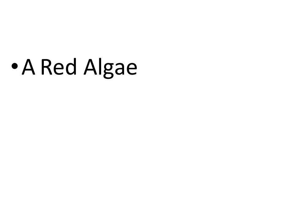 ARed Algae